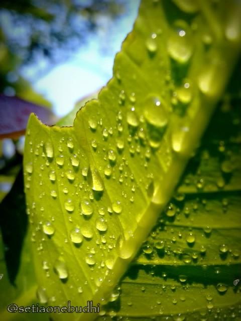 sisa hujan semalam 2-001.jpg