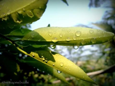 sisa hujan semalam 3-001.jpg